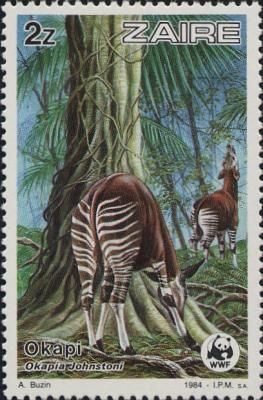"""Okapi - Democratic Republic of the Congo Zaire /zɑːˈɪər/, officially the Republic of Zaire (French: République du Zaïre; French pronunciation: [za.iʁ]), was the name of the state that existed between 27 October 1971 and 17 May 1997, currently named Democratic Republic of the Congo. Founded by Mobutu Sese Seko, the name of Zaire derives from the Portuguese word """"zaire"""", itself an adaptation of the Kongo word nzere or nzadi (""""river that swallows all rivers"""").:"""
