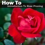 How To Root Roses From Cuttings Step By Step Tutorial #knockoutrosen How To Introduction To Rose Pruning #knockoutrosen How To Root Roses From Cuttings Step By Step Tutorial #knockoutrosen How To Introduction To Rose Pruning #knockoutrosen How To Root Roses From Cuttings Step By Step Tutorial #knockoutrosen How To Introduction To Rose Pruning #knockoutrosen How To Root Roses From Cuttings Step By Step Tutorial #knockoutrosen How To Introduction To Rose Pruning #knockoutrosen