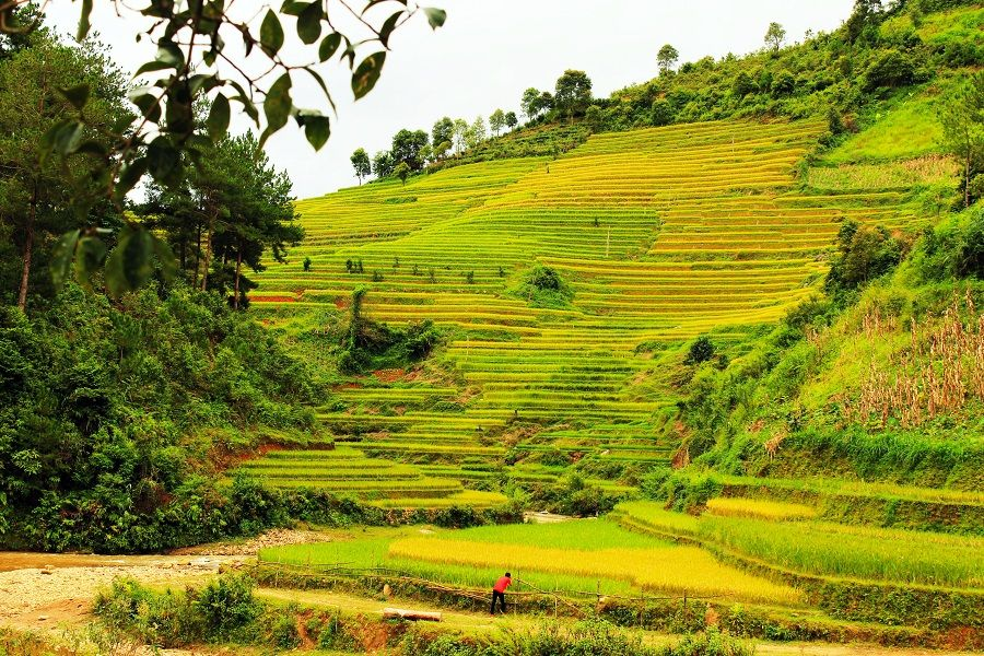 Mu Cang Chai is another gorgeous mountainous area in North