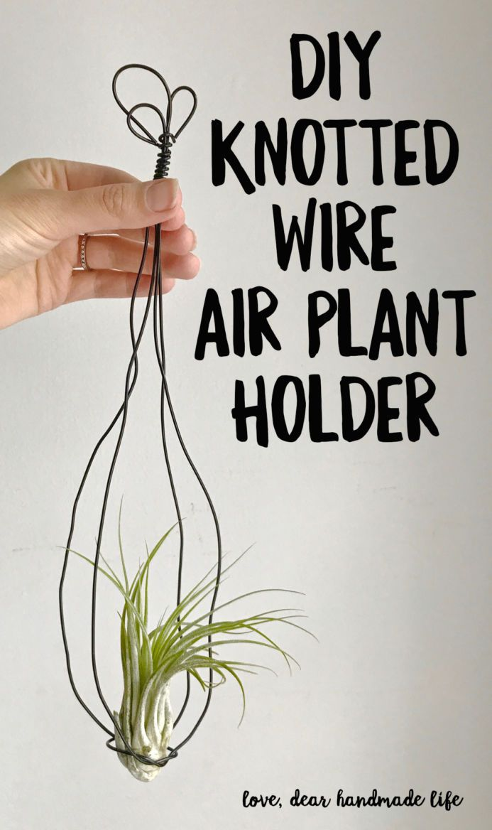 DIY Air Plant in a Vintage-inspired Hand-knotted Wire Hanger | Wire ...