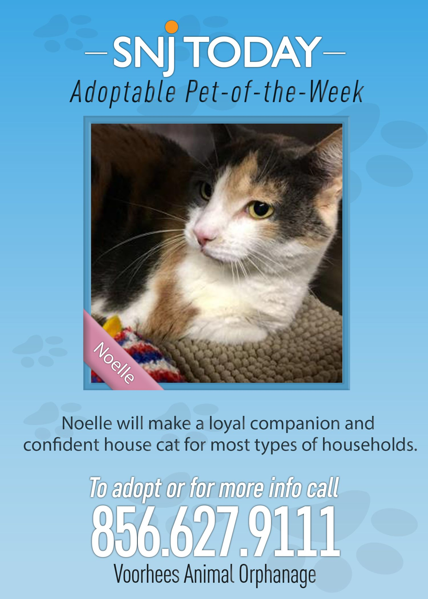 Snj Today S Adoptable Pet Of The Week Is Noelle Noelle Is A Friendly And Outgoing 6 Year Old Domestic Shor Animal Shelter Adoption Animal Shelter Cat Adoption