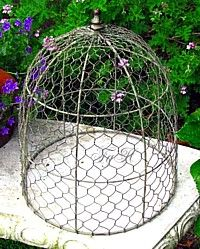 En Wire Bird Cage Protect Plants Think This Might Keep The Moose Out Of Broccoli