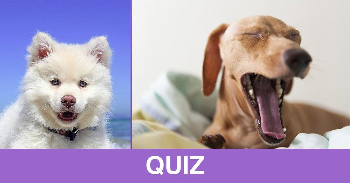 Quiz Can You Guess The Real Meaning Of These Common Dog Behaviors