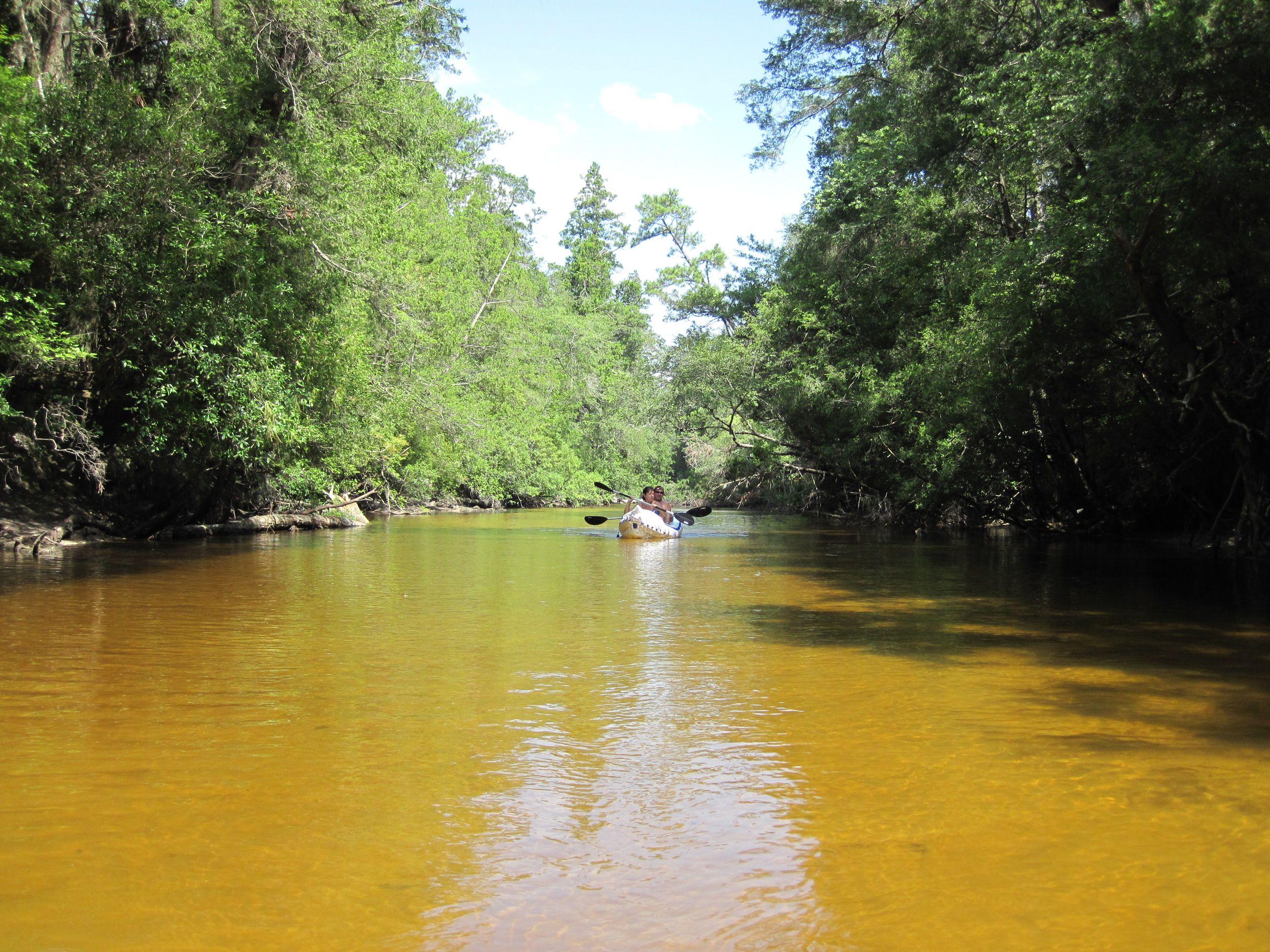 Canoeing At Blackwater River State Park Holt Florida - Florida rivers
