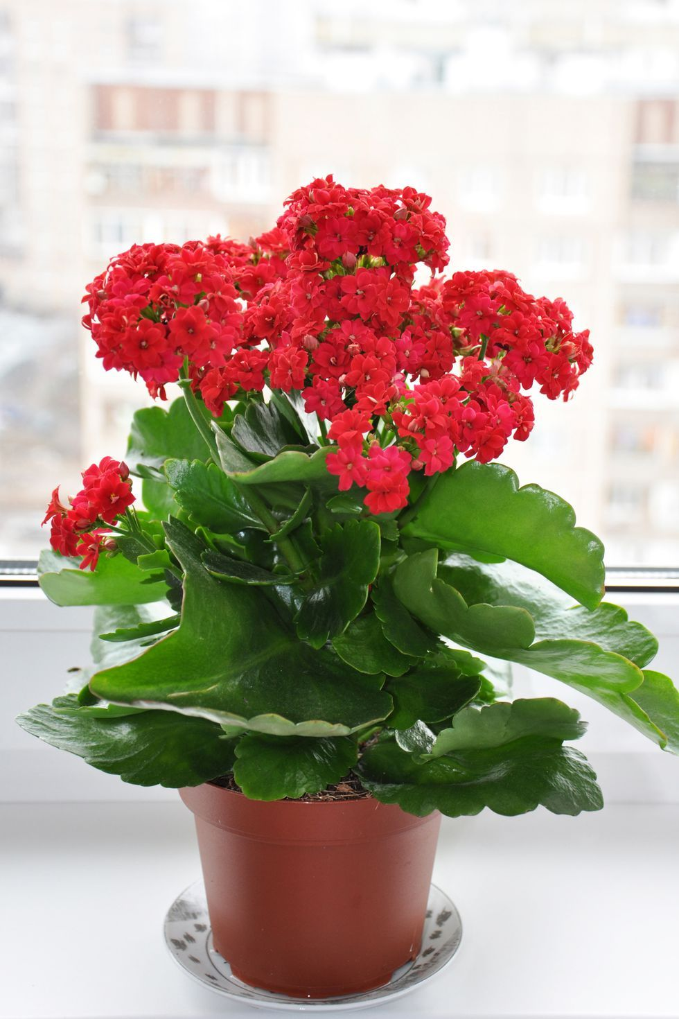 Good News These Indoor Plants Are Almost Impossible To Kill Indoor Flowers Indoor Flowering Plants Plants