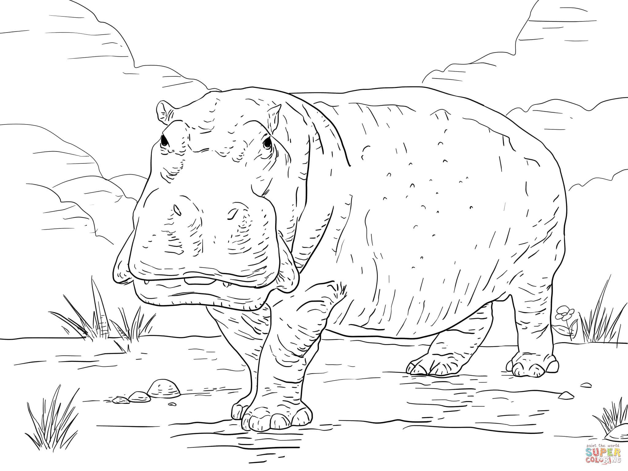 hippo coloring page  free printable coloring pages  free