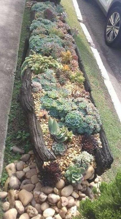 Photo of Succulent landscaping, Succulents garden, Planting succulents, Succulents, Garde…