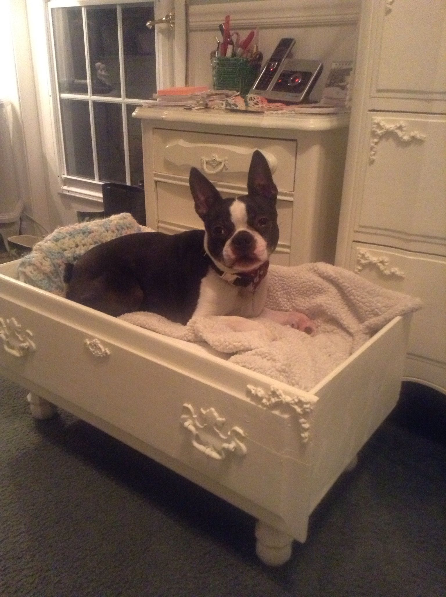 Brando in his new bed, made from a dresser drawer!!! Diy