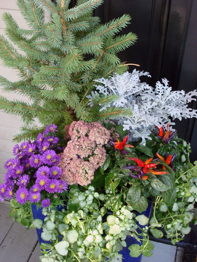 fall  annuals  containers  urban  garden  design  color  landscaping