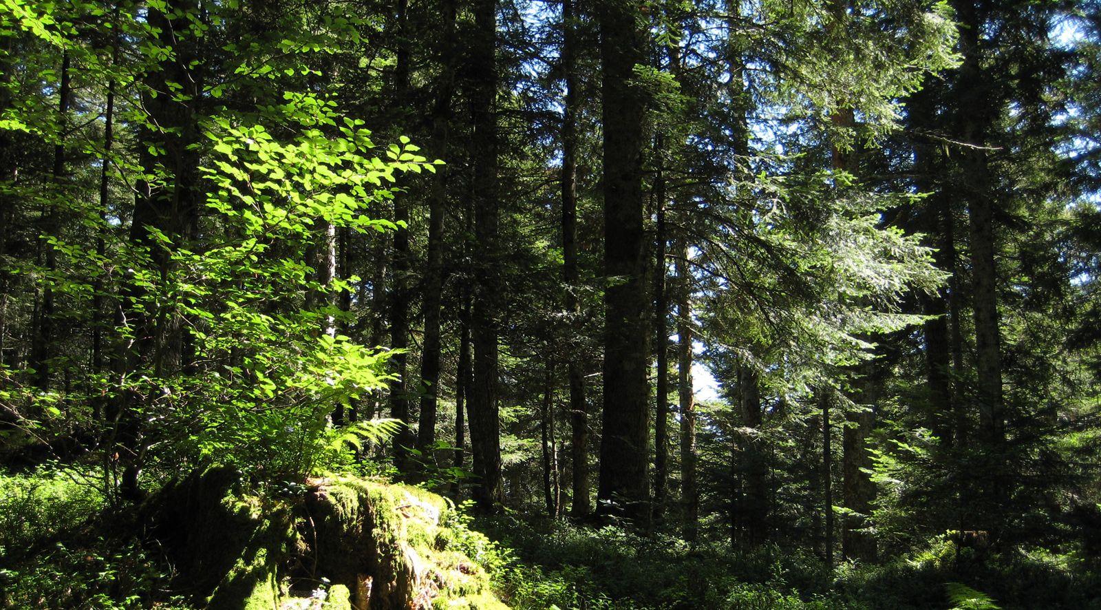 Camping Verneda - Naturaleza Val d'Aran