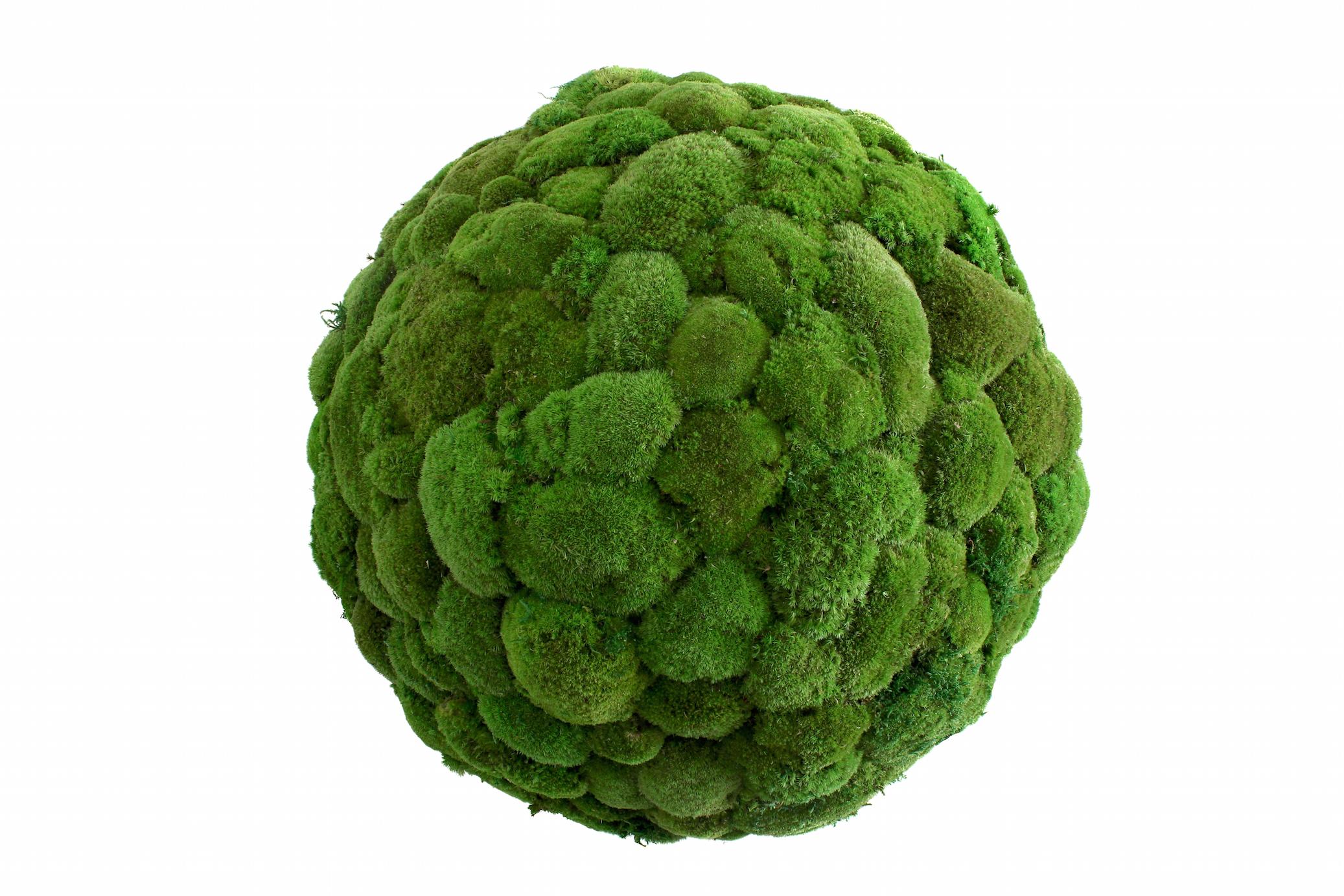 Grüne küchenwand ~ Stylegreen halfmoon in green moss innenraumbegrünung grüne