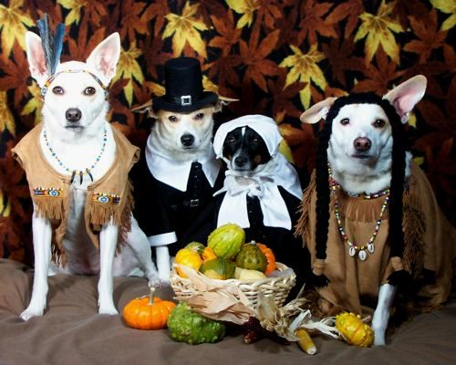 Thanksgiving Dogs