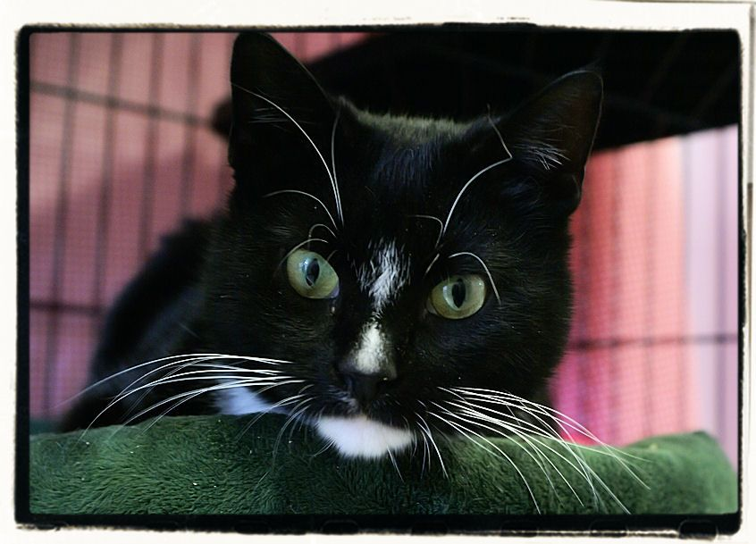 Adopt Taylor on Cat shelter, Cats, Animal rescue