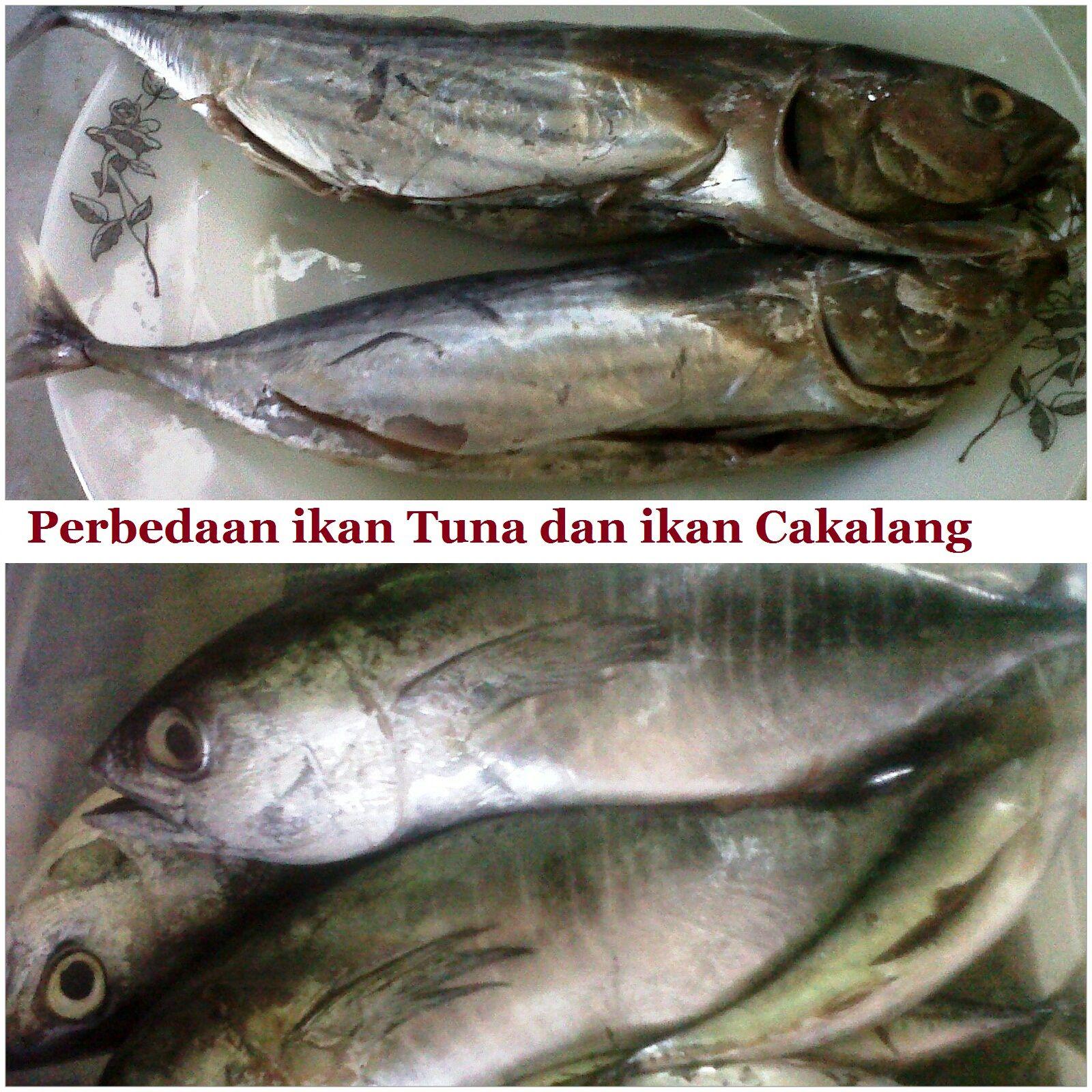 Jenis Ikan Nama Ikan Laut Di Malaysia