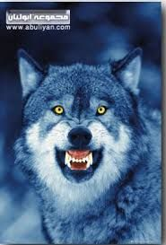 صور ذئاب Animals Beautiful Wolves Wild Wolf
