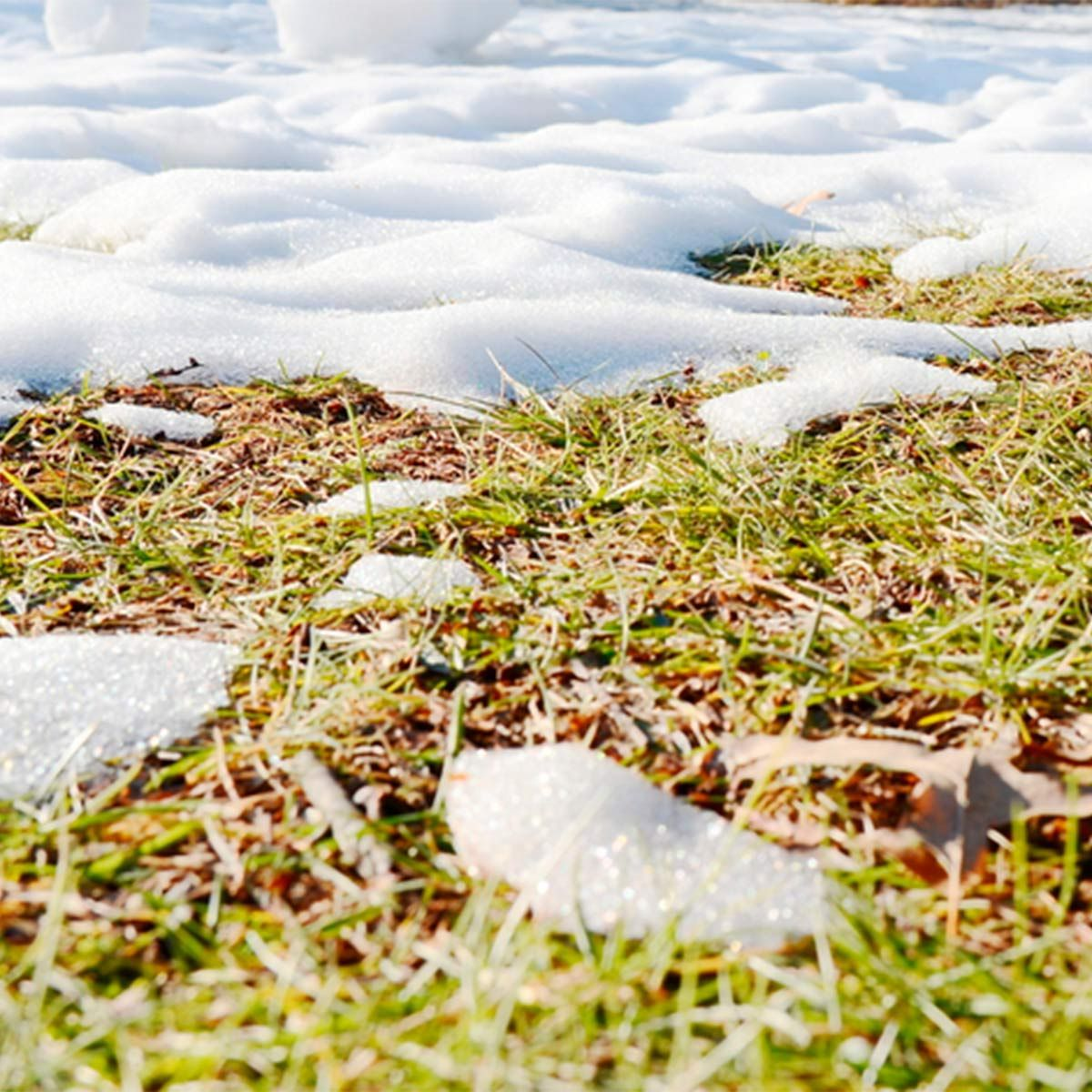The Quickest Way to Revive Your Lawn After Winter Winter