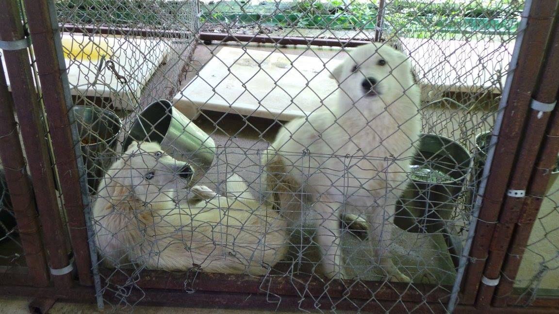 Puppy mill rescue nj