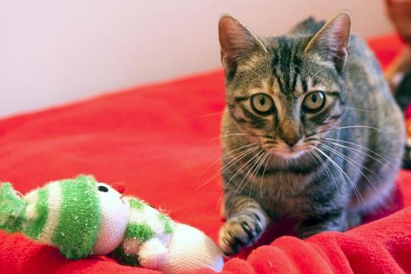 BUFFY - Gato adoptado - AsoKa el Grande