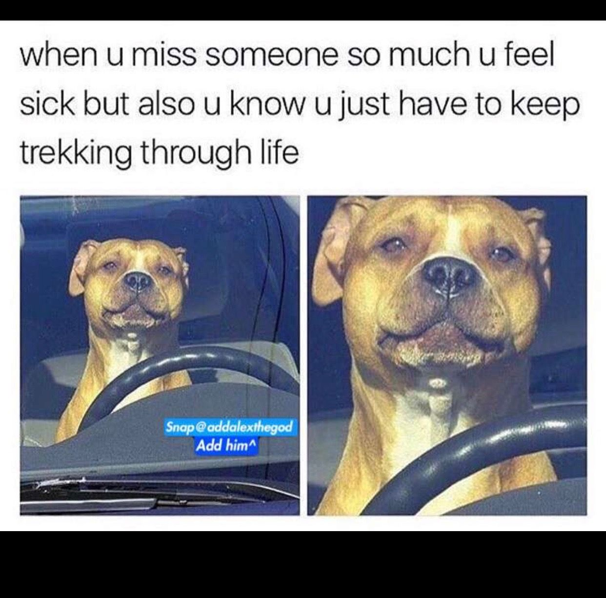 I Honestly Feel Like This Right Now I Have Been Throwing Up Non Stop For 3 Days Very Funny Pictures Funny Pictures Driving Memes