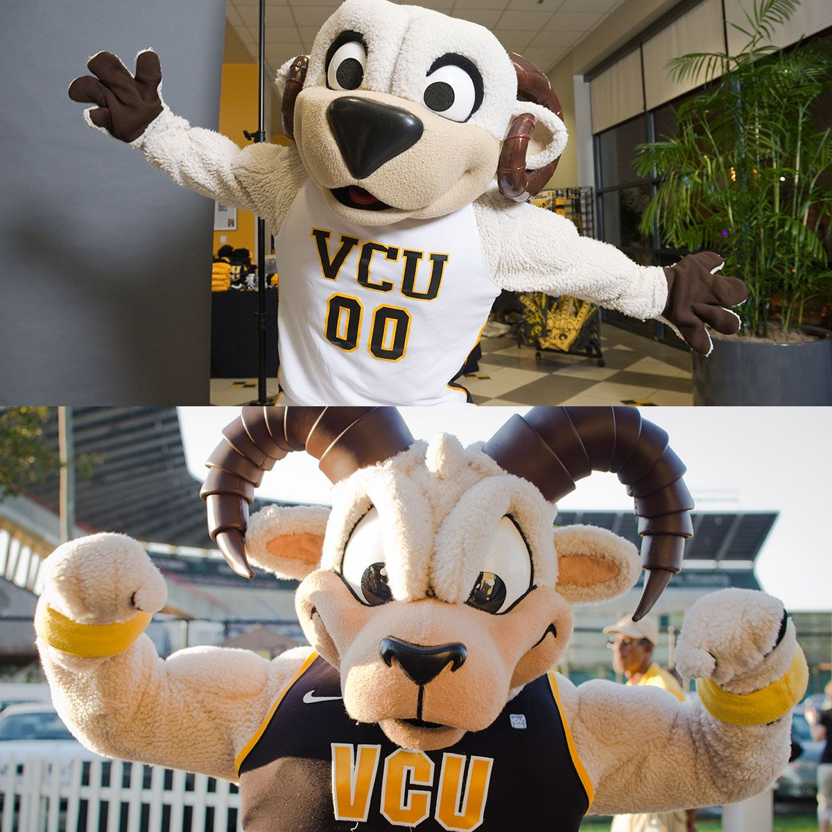 Rodney The Ram Transformationtuesday Vcu Mascot Cheerleading