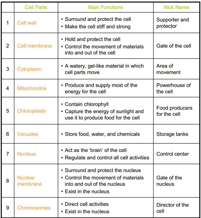 Cell Organelles Worksheet Cell Parts Cell Organelles Organelles