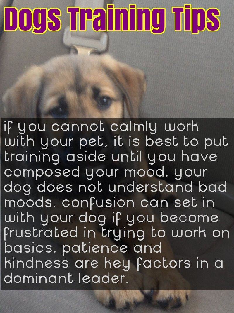 Treat Your Pet Right With These Dog Care Tips Dog Training Tips Dog Care Tips Dog Care