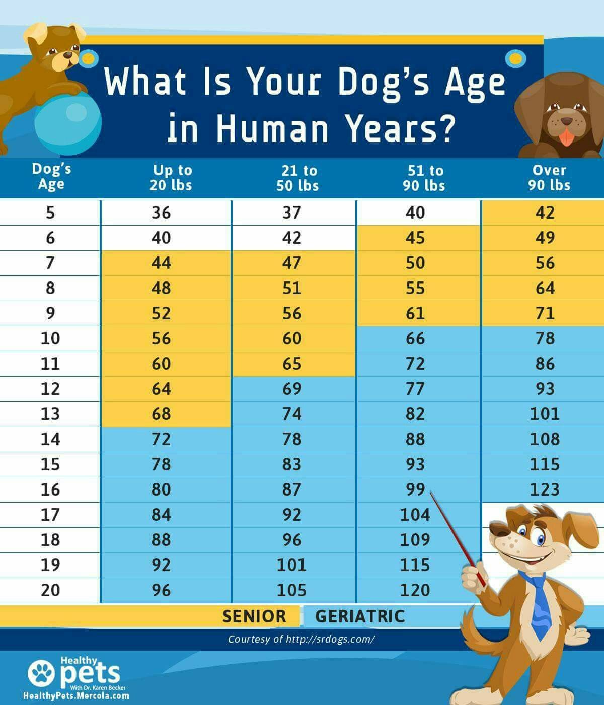 Dogs age in human years chart dog ages dog age chart
