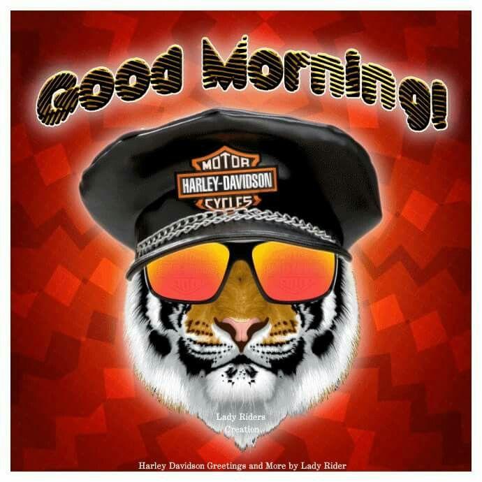 Good Morning Harley Bikes Harley Davidson Harley