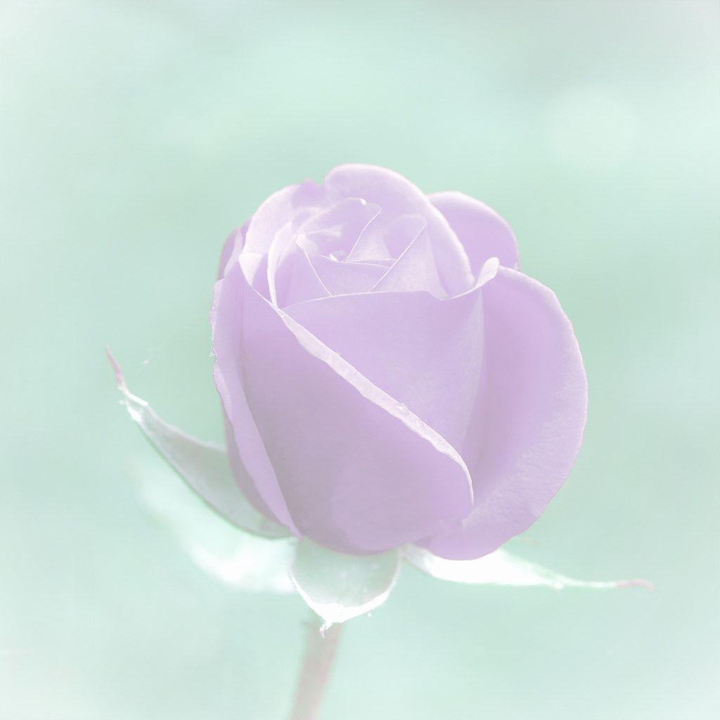 Pale #Rose  - www.gdecooman.fr - portfolio, stages photo, photographe mariage à Lille, naissance, bébé, évènements