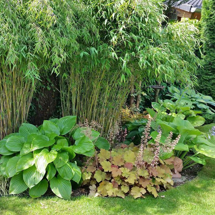 Photo of Bambus: et allsidig kjempegress