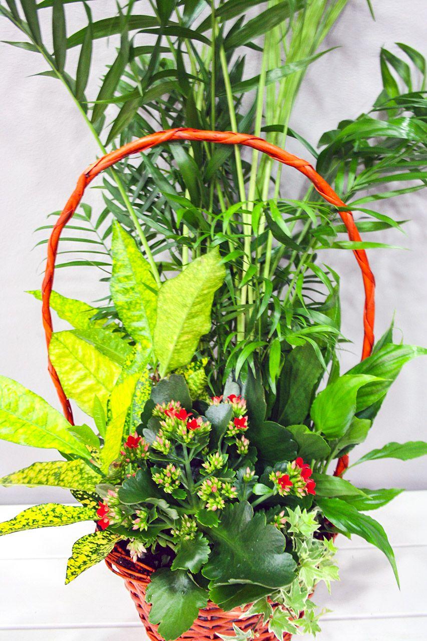 composicin de diferentes y variadas plantas de interior en una cestita con asa composiciones - Composiciones Florales