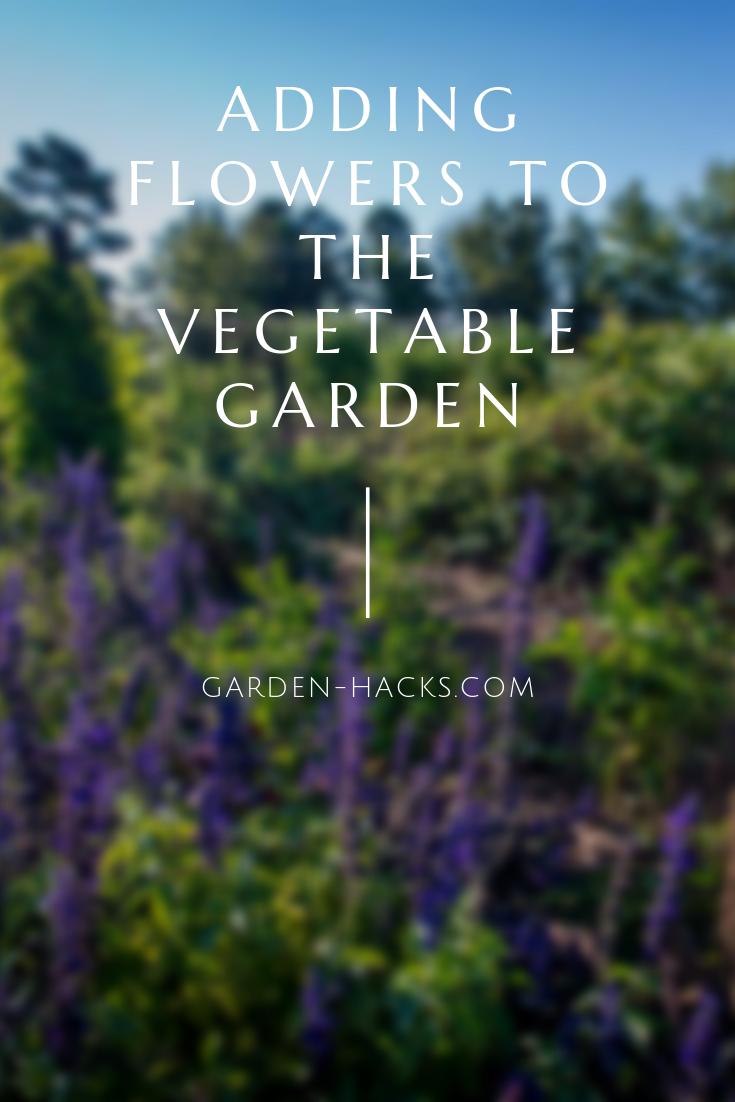 Best Vegetables To Grow In Pots Growing Vegetables 400 x 300