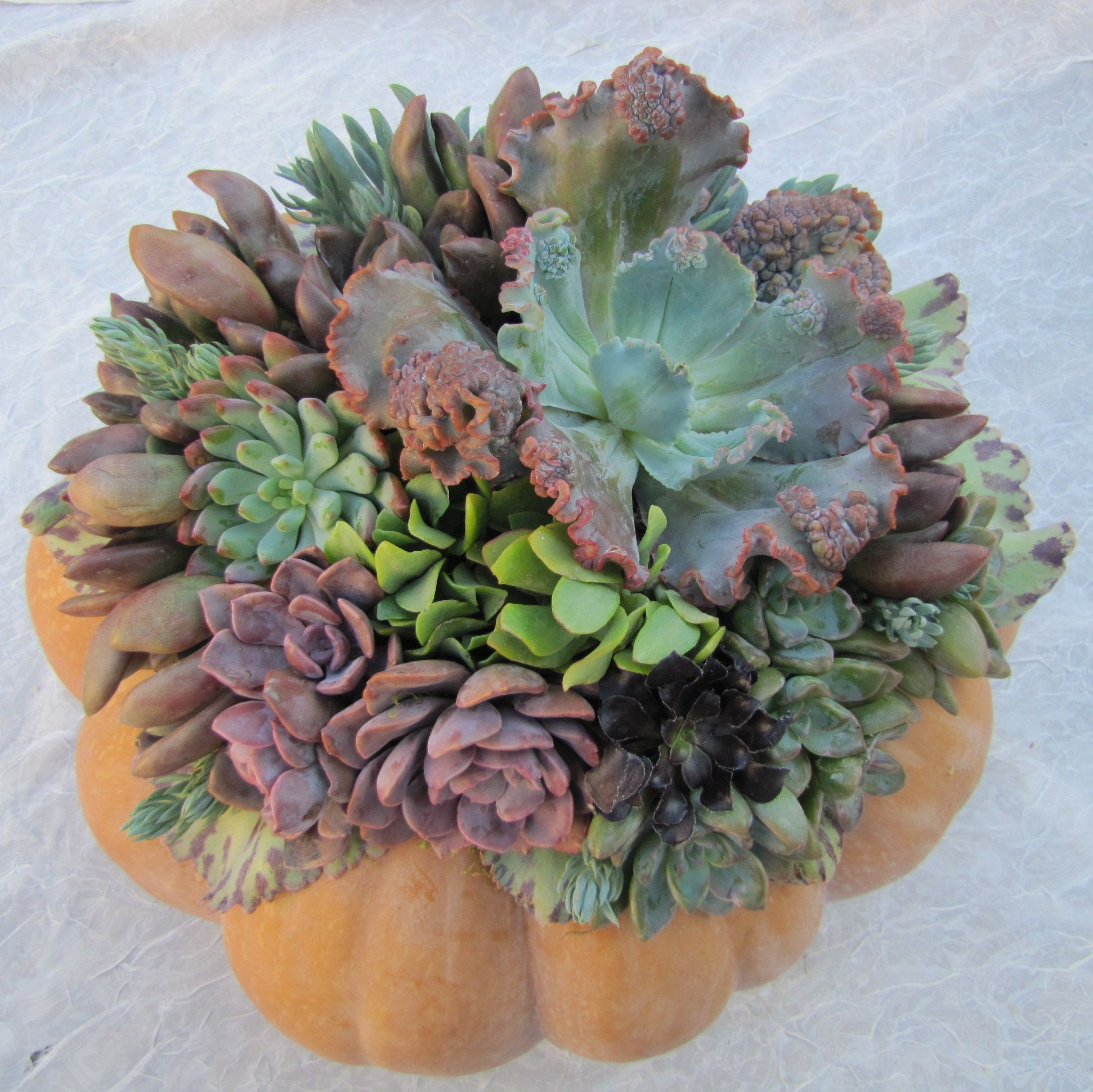 festive holiday decorations for home decor and gifting :: linda estrin garden design - pumpkins :: Gardenista