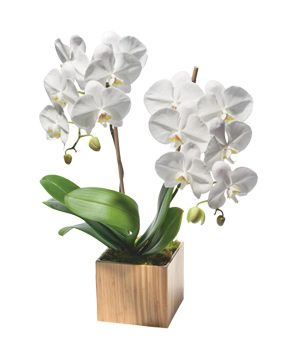 Opulent Orchids (Click through for an exclusive discount)