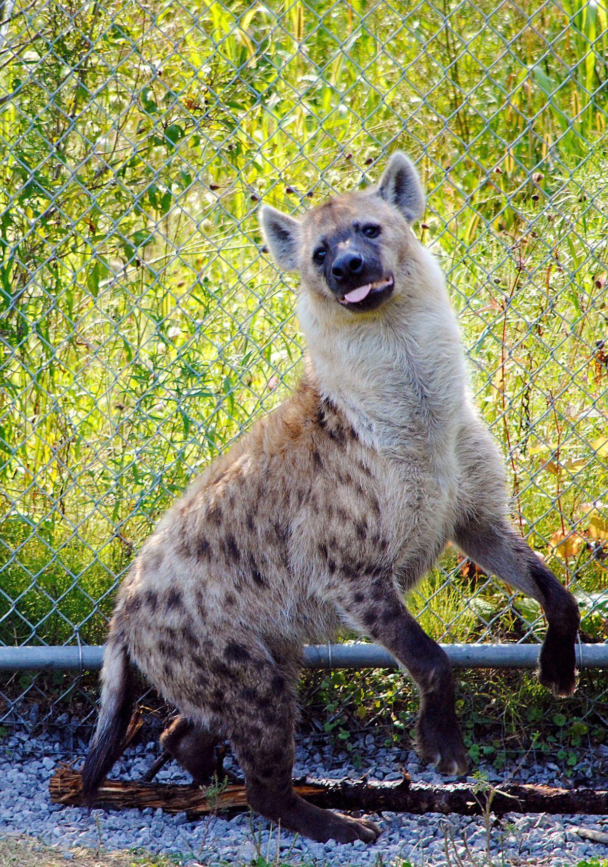 Pin by prettylizards on animal refs Animals, Animals