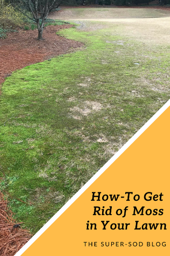 Pin On Diy Lawn Care