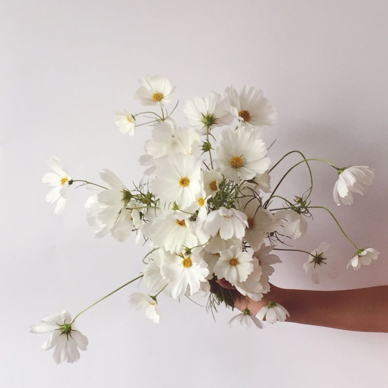 Armfuls Of Comos Summergarden Cosmos Vscocam Couturestyleco Vsco Grid Single Flower Bouquet Pretty Flowers Cosmos Flowers