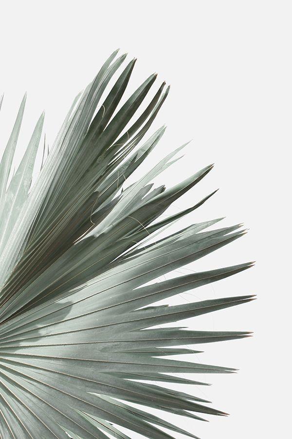 Blatt drucken, botanische drucken, botanische, Palm Leaf, botanische Wandkunst, Lead Prints, ... #botanicgarden