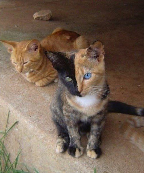 Reddit/r4ichuu 23 of 51  BATMAN'S FAVORITE CAT  On August 23, a two-faced Chimera calico cat became an Internet sensation after its owner posted a photo of her on Reddit.