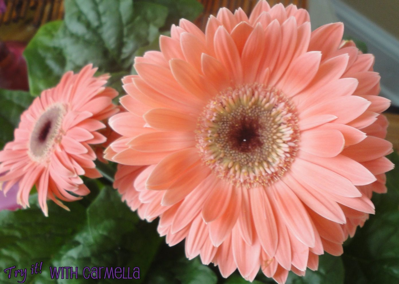 Things That Are Peach Colored | Peach Flowers