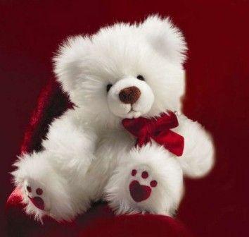 Beautiful Nice Teddy Bears Download Most Beautiful Teddy Bear