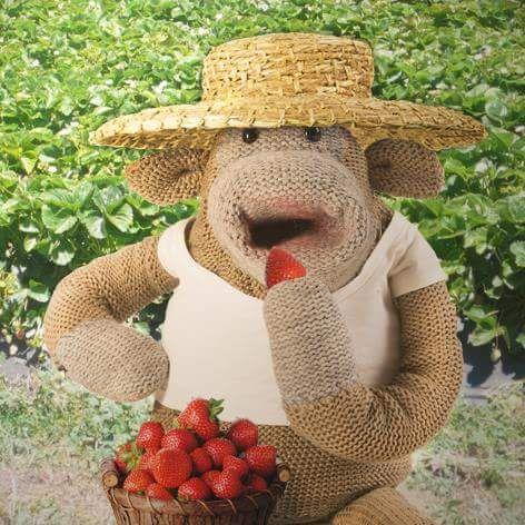 120 Best PG Monkey images | Monkey, Pg tips, Cuddles, snuggles  |Monkeys Mad Hatter