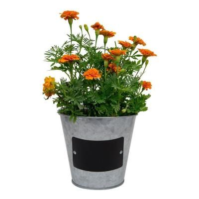 Pennington 5 5 in  Small Metal Tin Planter with Chalkboard