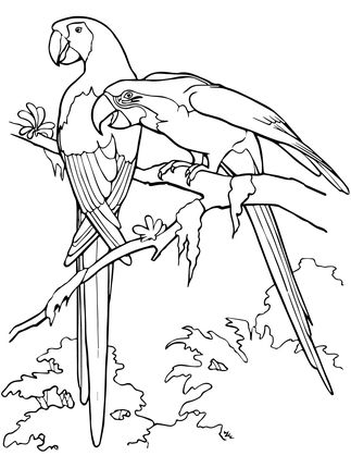 Click To See Printable Version Of Scarlet Macaws Coloring Page