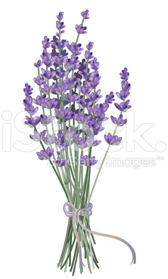 Realistic Lavender Bouquet Drawn With Gradient Mesh In 2020 Flower Clipart Watercolor Flowers Flower Art