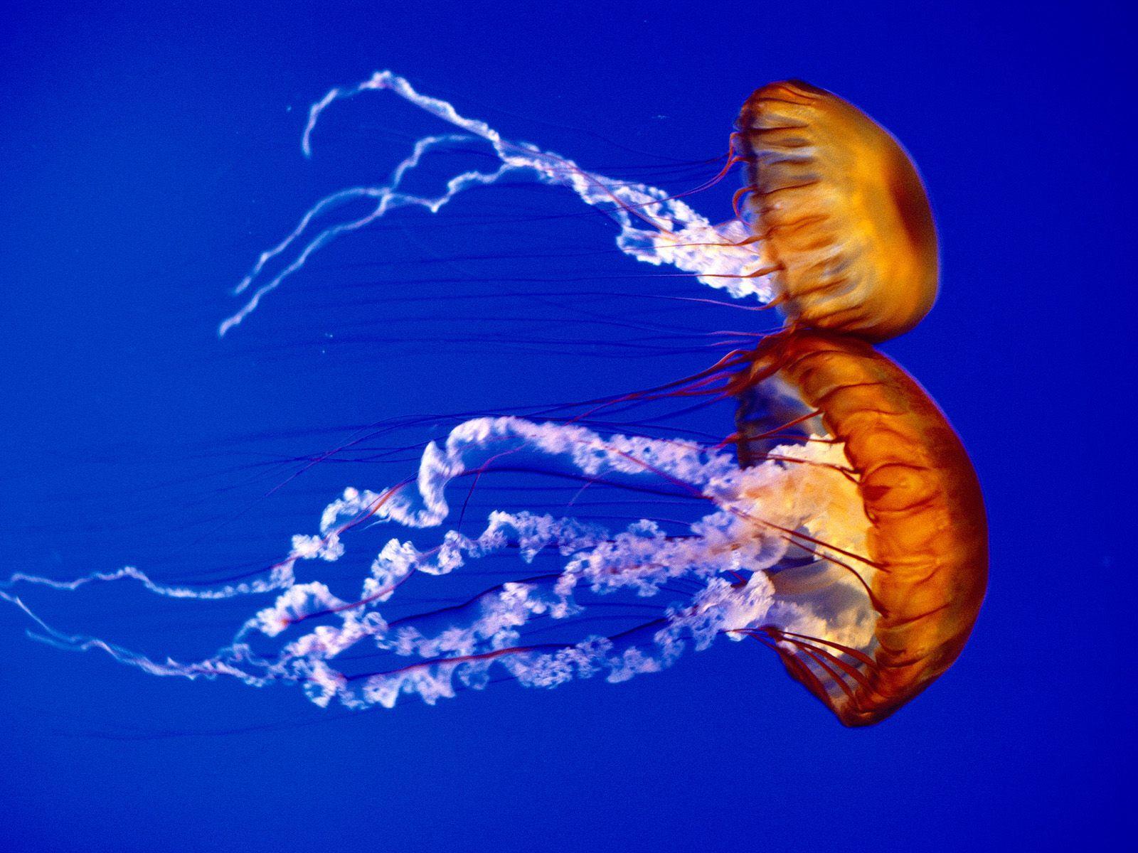 Deep Sea Creatures   Ocean's Magic   Underwater animals