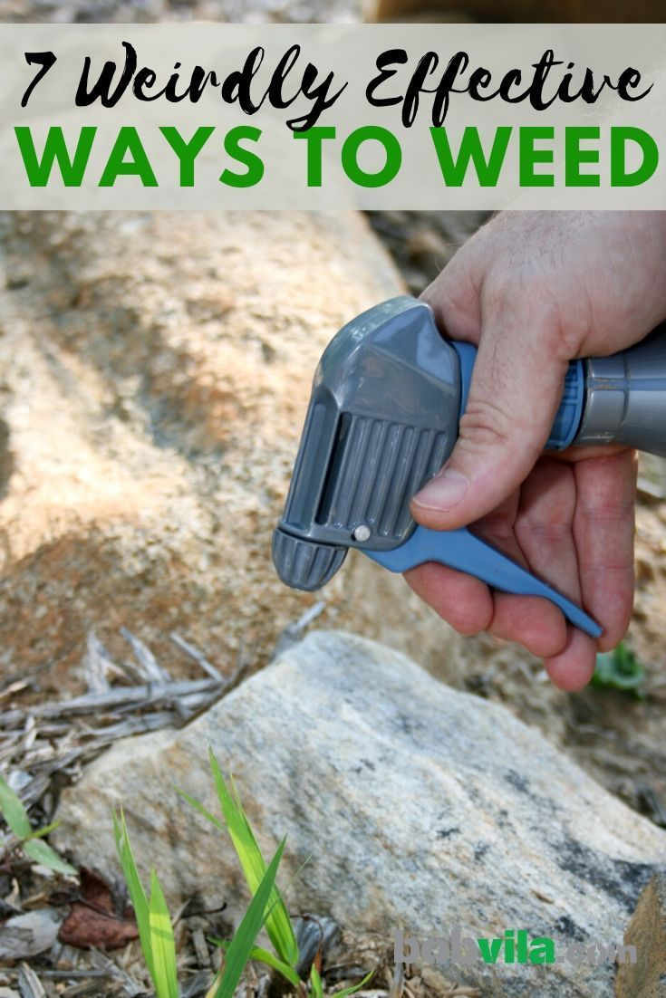 7 Weirdly Effective Ways to Weed