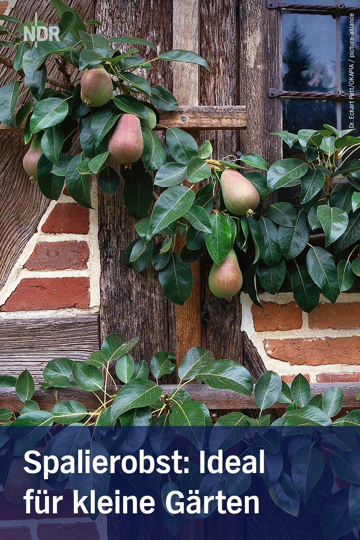 Spalierobst Ideal Fur Kleine Garten In 2020 Obstbaume Pflanzen
