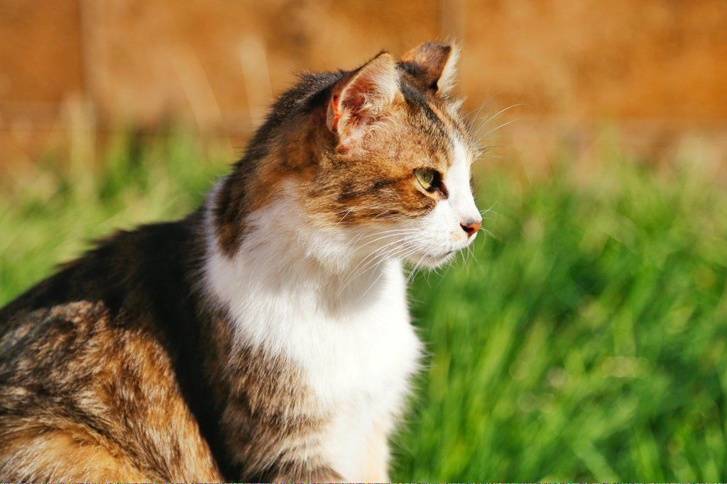 Cats Playing Catseatinggrass Product Id 939782810 With Images Why Do Cats Purr Cats That Dont Shed Cat Adoption
