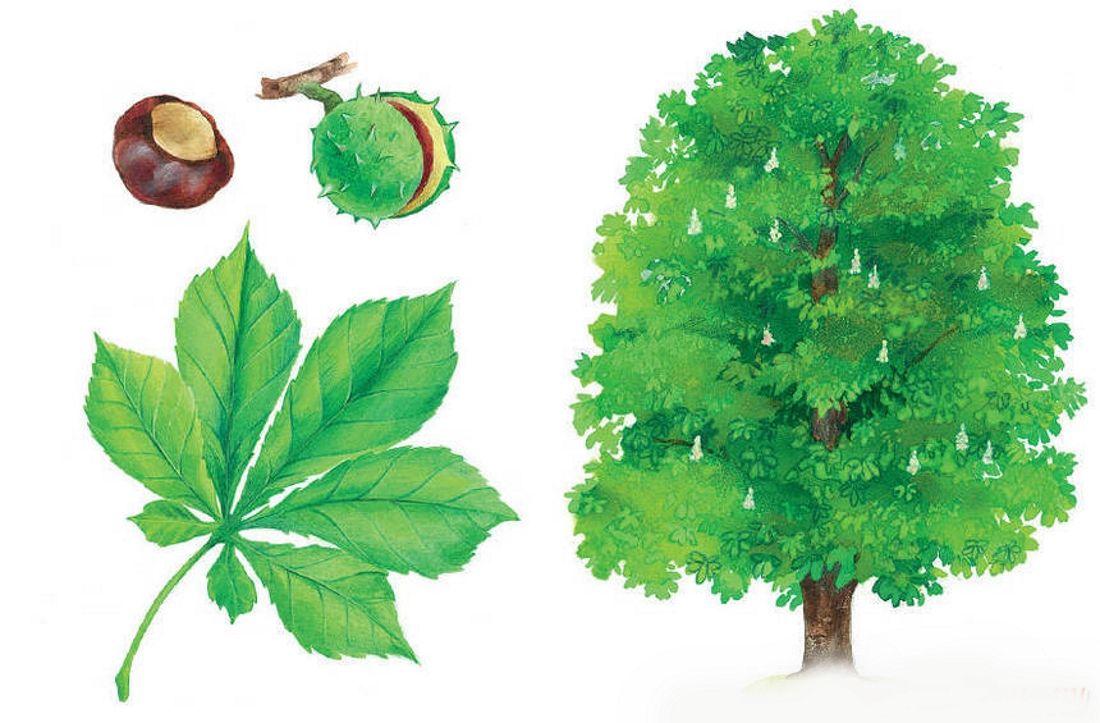 Новогодние, картинки деревьев с названиями